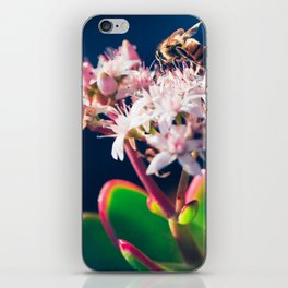 Crassula ovata Jade Flowers and Honey Bee Kula Maui Hawaii iPhone Skin