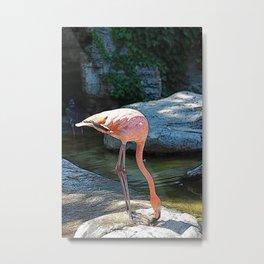 Pink Flamingo drinking some wah wah Metal Print