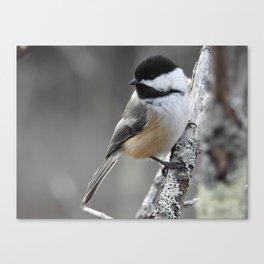 Chickadee on a Stick Canvas Print