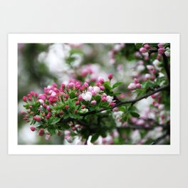 Blooming Beauty Art Print