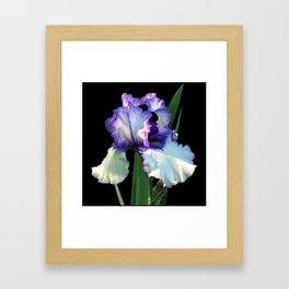 Iris 'Freedom Song' on black Framed Art Print
