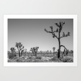 Joshua Tree in Black & White Art Print