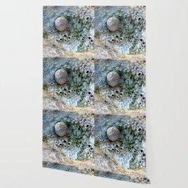 Nacre rock with sea snail Wallpaper