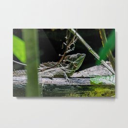 Emerald Basilisk Lizard Metal Print