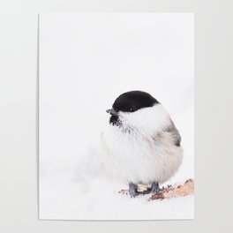 Cute Willow Tit sitting in the snow #decor #buyart #society6 Poster