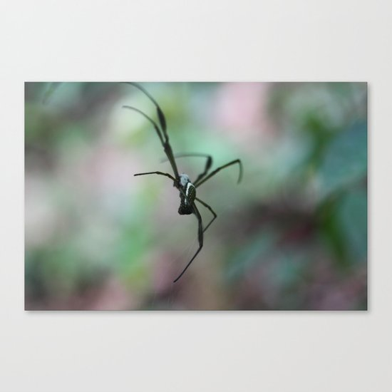 Spider in Mid Air Canvas Print