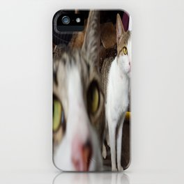 Back Yard Kitties  iPhone Case