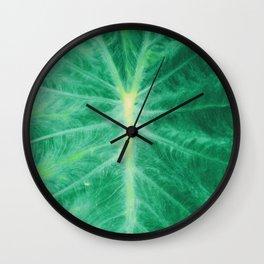Colocasia Esculenta Wall Clock