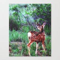 Descry Canvas Print