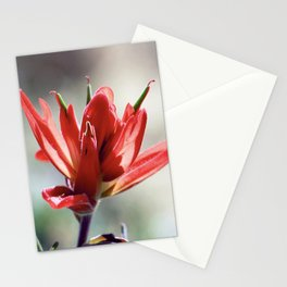 Desert Blossom 1 Stationery Cards