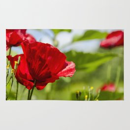 Red Poppies in the wind Rug