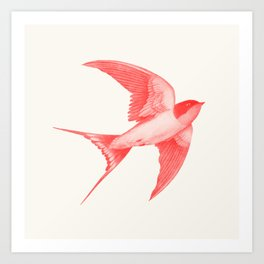 Barn Swallow (red) Art Print