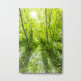Wild nature parks VII - Nature Fine Art photography Metal Print