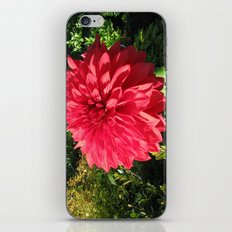 Blooming Just For You iPhone Skin