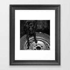 b/w dog Framed Art Print