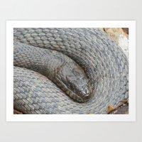 Sleeping Serpent Art Print