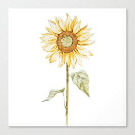 Sunflower 01 Canvas Print