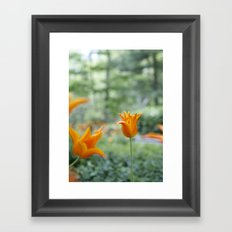 Tulips in orange Framed Art Print