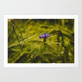 purple on green Art Print