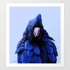 Red Tailed Cockatoo Art Print