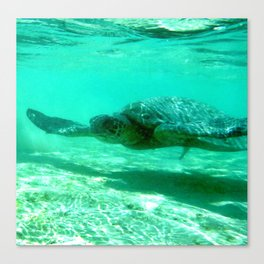 Honu - Turtle in Hawaii Canvas Print