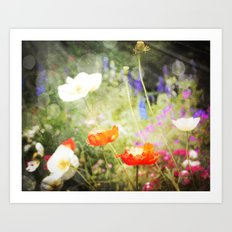 Magic Poppies Art Print