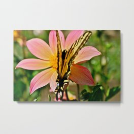 Dahlia v. Butterfly Metal Print
