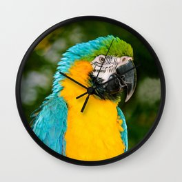 Blue and Gold Macaw Parrot Wall Clock