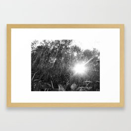 Sunlight Through the Grass Framed Art Print