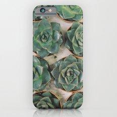 Succulent Collection iPhone 6s Slim Case