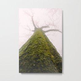 Mossy Bark. Metal Print