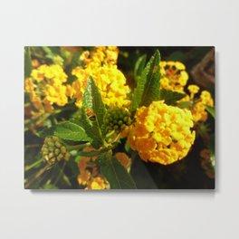 Bight Yellow Flowers Metal Print