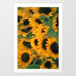 Beautiful Sunflowers Art Print