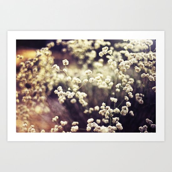 Baby's Breath 2 Art Print