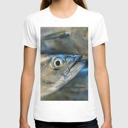 Big eye, tuna, fish, still life, photo, fine art, print, nature, sea, fishing, detail, blue T-shirt