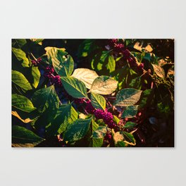Berries in the Wild Canvas Print