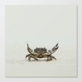 Open arms crab Canvas Print