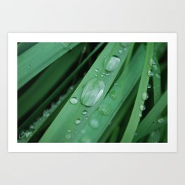 water on grass Art Print