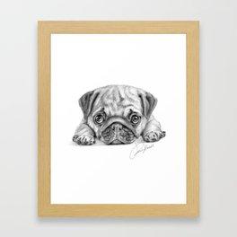 pug dog - carlino - carlin - doguillo Framed Art Print