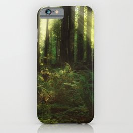 Basking in the Glory of the Redwoods  iPhone Case