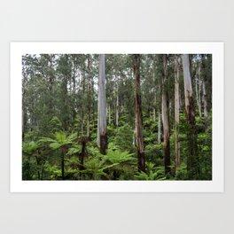 Mountain Rainforest Art Print
