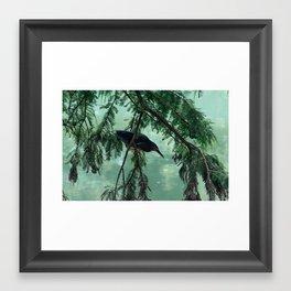 Green Heron Framed Art Print
