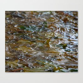 drops & sheETs Canvas Print
