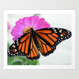 monarch/flower Art Print