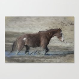 Mustang Getting Out of a Muddy Waterhole the Slow Way painterly Canvas Print