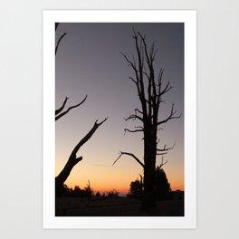 Bristlecone 7 Art Print
