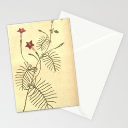 244-ipomoea quamoclit, Winged leaved Ipomoea Stationery Cards