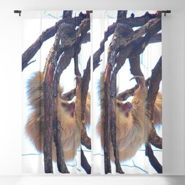 Two-toed sloth and orchids in Costa Rica Blackout Curtain