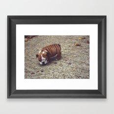 Pudge Framed Art Print