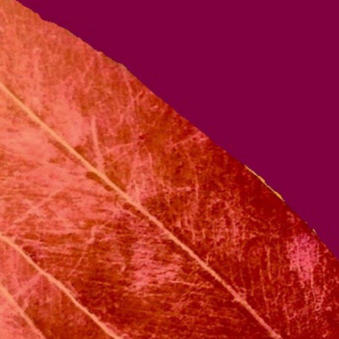 Red Wine Winter Nights, Romance Leggings